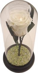 Cupola cu trandafir criogenat fosforescent Sevirox Decor Unique Alb Verde fosforescent Inaltime 21 cm x diametru 11 5 cm Flori si Aranjamente florale