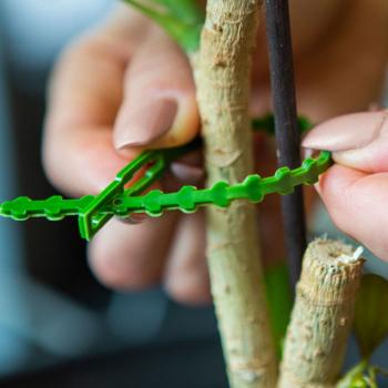 Set 40 coliere/fasete dezlegabile/refolosibile pentru organizarea plantelor 165 x 50 mm plastic ABS verde inchis Lacate