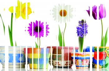 Jaluzele imprimate model Flori 150X160 cm
