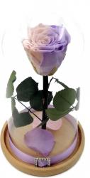 Trandafir Natural Criogenat Wide Flowers bicolor roz-mov in cupola mica de sticla
