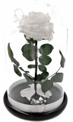 Trandafir Criogenat Wide Flowers mare alb pe pat de petale in cupola mare de sticla cu baza neagra