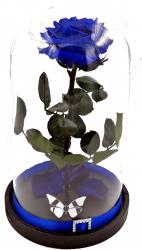Trandafir Criogenat Wide Flowers mare albastru royal pe pat de petale in cupola mare de sticla cu baza neagra