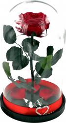 Trandafir Criogenat Wide Flowers mare rosu pe pat de petale in cupola mare de sticla cu baza neagra
