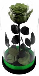 Trandafir Criogenat Wide Flowers mare verde pe pat de petale in cupola mare de sticla cu baza neagra