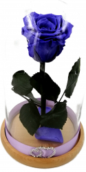 Trandafir Natural Criogenat Wide Flowers indigo pe pat de petale in cupola mica de sticla