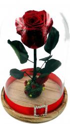 Trandafir Natural Criogenat Wide Flowers rosu pe pat de muschi stabilizat in cupola mica de sticla