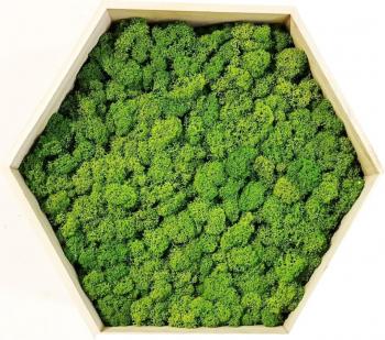 Tablou cu licheni naturali stabilizati Hexagonal 31x26x13 Verde Tablouri