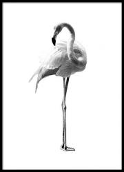 Poster inramat Flamingo 30x45 cm Tablouri