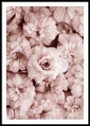 Poster inramat Trandafiri roz 30x45 cm Tablouri