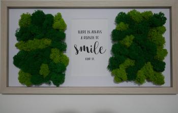 Tablou licheni stabilizati - Smile Tablouri