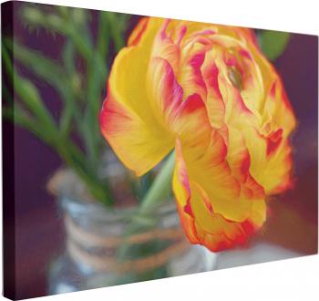 Tablou Canvas Floare de Ranunculus 50 x 70 cm 100 Bumbac Tablouri