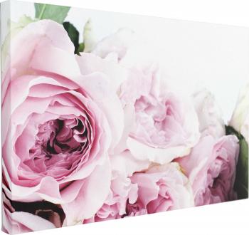 Tablou Canvas Trandafiri roz 50 x 70 cm 100 Bumbac Tablouri