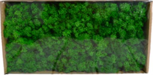 Licheni stabilizati Verde Broccoli 500 g