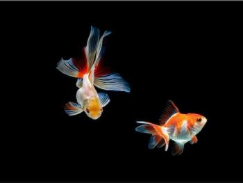 Panou sticla decorativa bucatarie protectie aragaz antistropire Print UV octopus imprimata Multicolor 650mmx600mm oct119-65x60
