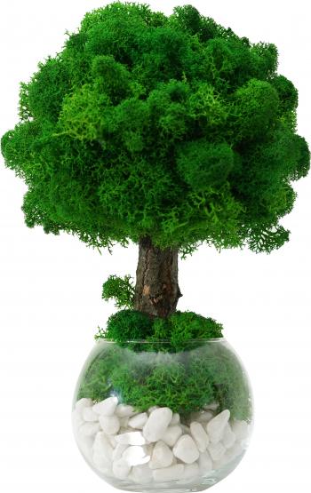 Copacel / Pomisor ornamental cu licheni stabilizati cu mini instalatie LED alba 25cm H Skinali Decor perfect pentru cadou