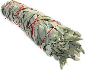 Salvie Alba Californiana manunchi - 10cm Odorizante