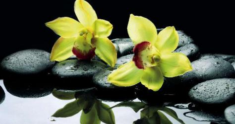 Panou bucatarie protectie plita aragaz antistropire print UV model 2 Orhidee Verzi 600x500 mm