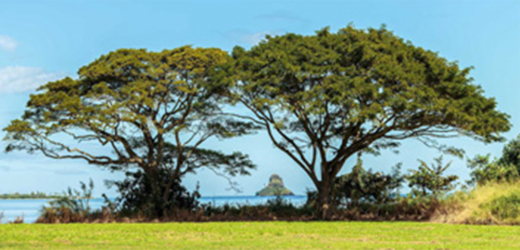 Panou bucatarie protectie plita aragaz antistropire print UV model Arbori 600x600 mm Placi decorative