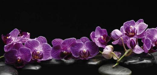 Panou bucatarie protectie plita aragaz antistropire print UV model Orhidee 36 600x500 mm