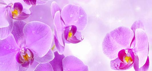 Panou bucatarie protectie plita aragaz antistropire print UV model Orhidee Violet 12 600x500 mm