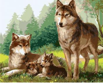 Set pictura pe numere Tablou cu lupi Tablouri