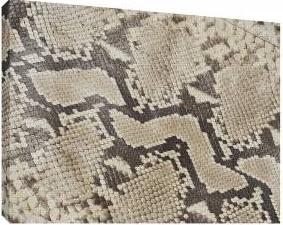 Piele de sarpe 2 - Tablou canvas - 52x70 cm Tablouri