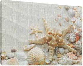 Scoici pe nisip 6 - Tablou canvas - 52x70 cm Tablouri