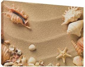 Scoici pe nisip 7 - Tablou canvas - 52x70 cm Tablouri