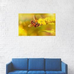 Tablou Canvas Albina de miere Apis 20 x 35 cm Tablouri