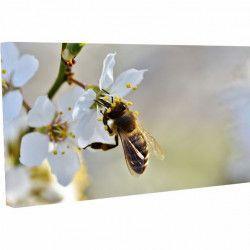 Tablou Canvas Albina pe floarea alba 20 x 30 cm Tablouri