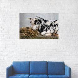 Tablou Canvas Animale Caprita la masa 20 x 30 cm