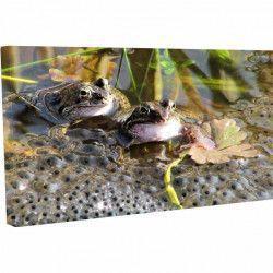 Tablou Canvas Broasca de nurca America de Nord 20 x 30 cm Tablouri