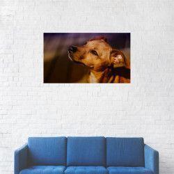 Tablou Canvas Catelus Corcitura de Chiwawa 40 x 70 cm Tablouri