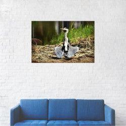 Tablou Canvas Cocor canadian 20 x 30 cm Tablouri