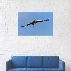 Tablou Canvas Falconiformes Soim calator 20 x 30 cm Tablouri