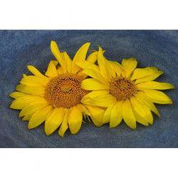 Tablou Canvas Floarea soarelui Pereche 90 x 60 cm Multicolor