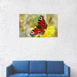 Tablou Canvas Fluture colorat in natura 20 x 35 cm Tablouri