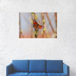 Tablou Canvas Fluture cu ochi 20 x 30 cm Tablouri
