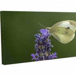 Tablou Canvas Fluture pe zambila 40 x 70 cm Tablouri
