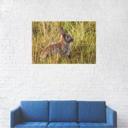 Tablou Canvas Iepure in iarba 40 x 60 cm Tablouri