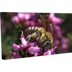 Tablou Canvas Insecta Apis pe flori 40 x 60 cm Tablouri