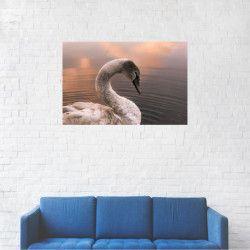 Tablou Canvas Lebada pe lac Apus de soare 60 x 90 cm Tablouri