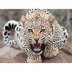 Tablou Canvas Leopard 80 x 60 cm Rama lemn Multicolor Tablouri