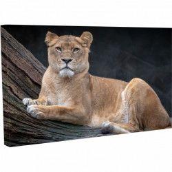 Tablou Canvas Leu pe scoarta de copac 40 x 70 cm Tablouri