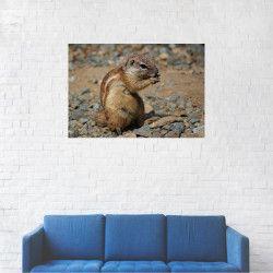Tablou Canvas Marmota infometata 40 x 60 cm Tablouri