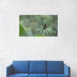 Tablou Canvas Panza de Paianjen in natura 20 x 35 cm Tablouri