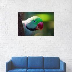 Tablou Canvas Papagal cu guler trandafiriu 20 x 30 cm Tablouri