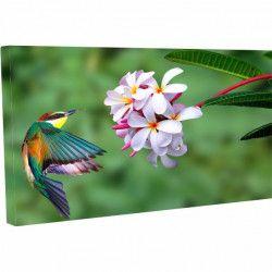 Tablou Canvas Pasarea multicolora pe floare 60 x 90 cm Tablouri
