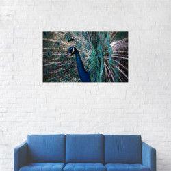 Tablou Canvas Paun cu penele deschise 20 x 35 cm Tablouri