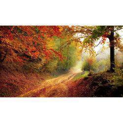 Tablou Canvas Peisaj de toamna 90 x 60 cm Rama lemn Multicolor Tablouri